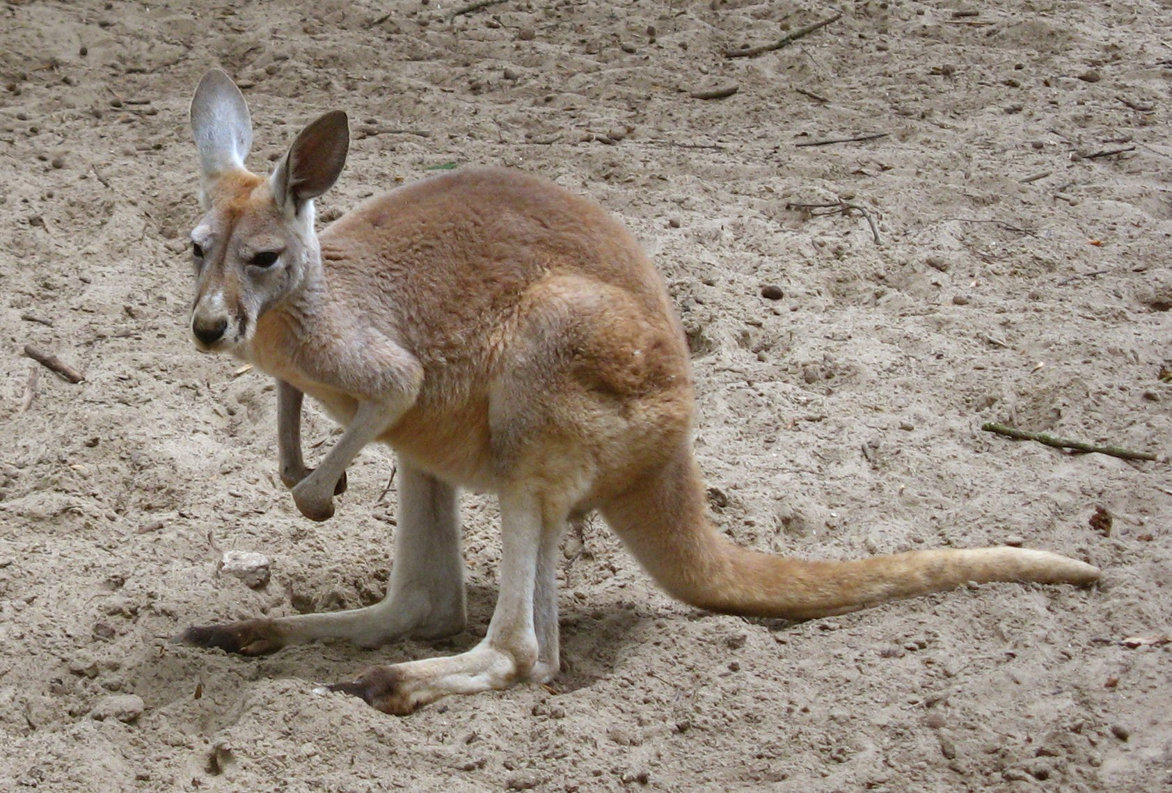 Kangaroos Have 3 Vaginas & 4 Other Creepy, Cool Animal Sex Facts